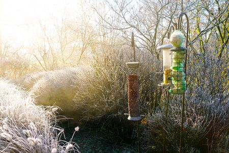 Bird feeders with mixed seeds in beautiful garden during frozen winter. Nesting box with feed grains and cereal for birds during winter season in frozen garden