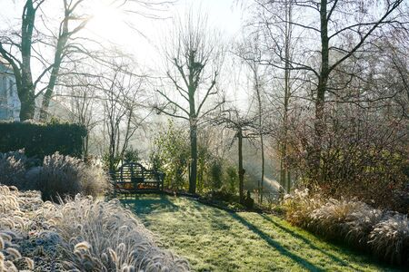 A landscape view on a winter morning in frost and sunlight of a garden, plant borders, green frosty grass lawn brown.