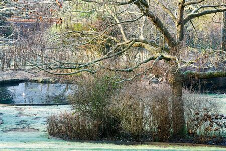 Winter at the pond in natural beautiful garden. A landscape view on a summer morning in frost and sunlight of a garden, plant borders, green frosty grass lawn brown.