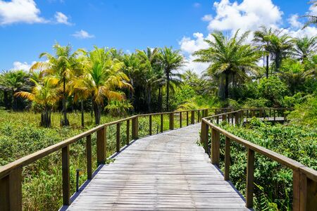 Woded bridge over the tropical forest. Wooden bridge walkway in rain forest supporting lush ferns and palms trees during hot sunny summer. Praia do Forte, Brazil