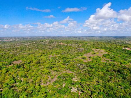 Aerial view of tropical forest, jungle in Praia Do Forte, Brazil. Detailed of a forest supporting lush ferns and palms trees. mountain ranges and hills covered by evergreen forest. Zdjęcie Seryjne - 138554547
