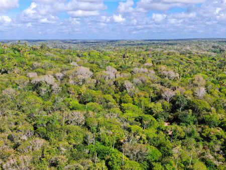 Aerial view of tropical forest, jungle in Praia Do Forte, Brazil. Detailed of a forest supporting lush ferns and palms trees. mountain ranges and hills covered by evergreen forest. Zdjęcie Seryjne - 138554756