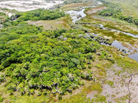 Aerial view of tropical rain forest, jungle in Brazil. Wetland forest with river, lush ferns and palms trees. Praia do Forte, Brazil