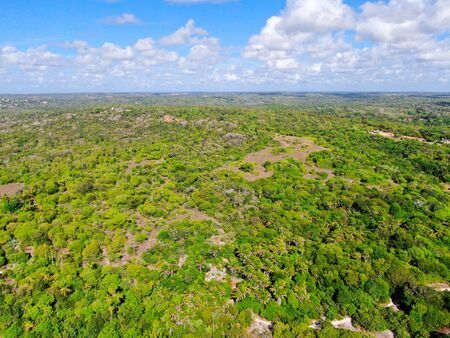 Aerial view of tropical forest, jungle in Praia Do Forte, Brazil. Detailed of a forest supporting lush ferns and palms trees. mountain ranges and hills covered by evergreen forest. Zdjęcie Seryjne