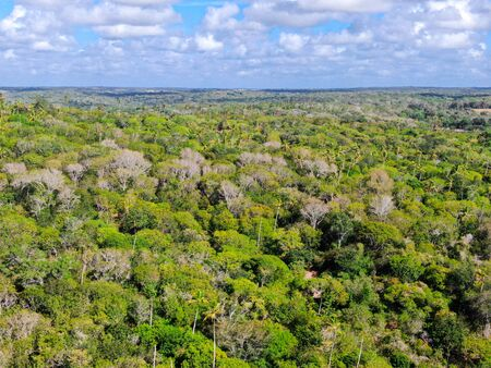 Aerial view of tropical forest, jungle in Praia Do Forte, Brazil. Detailed of a forest supporting lush ferns and palms trees. mountain ranges and hills covered by evergreen forest. Zdjęcie Seryjne - 138554749