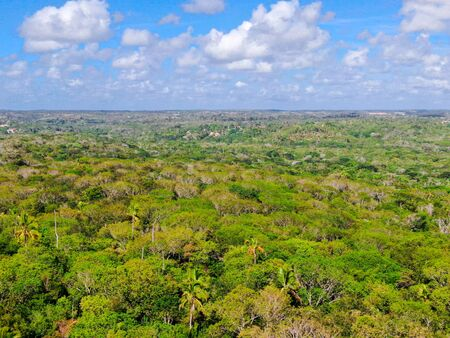 Aerial view of tropical forest, jungle in Praia Do Forte, Brazil. Detailed of a forest supporting lush ferns and palms trees. mountain ranges and hills covered by evergreen forest. Zdjęcie Seryjne - 138554751
