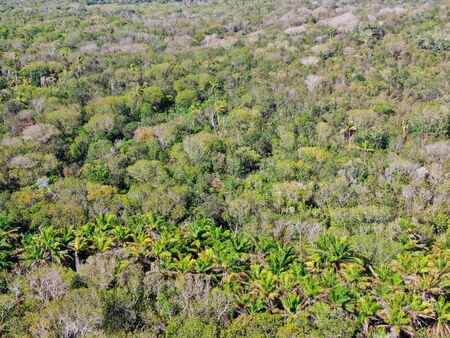 Aerial view of tropical forest, jungle in Praia Do Forte, Brazil. Detailed of a forest supporting lush ferns and palms trees. mountain ranges and hills covered by evergreen forest. Zdjęcie Seryjne - 138554759