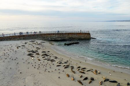 Sea lions and seals napping on a cove under the sun at La Jolla, San Diego, California. The beach is closed from December 15 to May 15 because it has become a favorite breeding ground for seals.