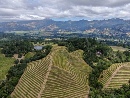 Aerial view of Napa Valley vineyard landscape during summer season. Napa County, in Californias Wine Country.