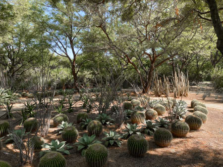 Tropical desert garden with dry plant and cactus.