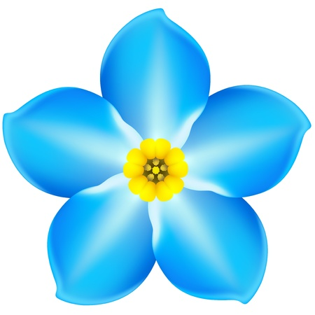 Vector illustration - blue forget-me-not  EPS 10, RGB  Created with gradient mesh 版權商用圖片 - 18192745