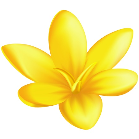 Vector illustration - yellow crocus. EPS 10, RGB. Created with a gradient mesh.
