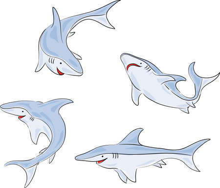 four pictures of a young shark