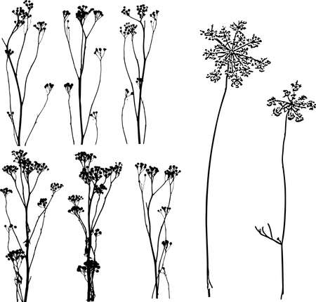 Lot of herbs and flowers silhouettes