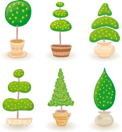 zypresse: Sechs typischen kleinen Garten B�ume in verschiedenen Formen-1