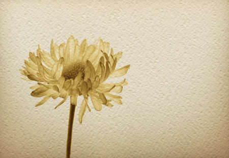 Watercolor paper background with monochrome sepia image of a flower.