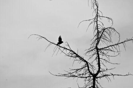 aloneness: A bird taking flight Stock Photo