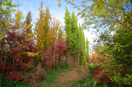 seasonable: All the colors of the trees in a beautiful autumns day.