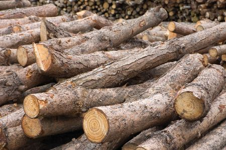 Pile of freshly cut logs photo