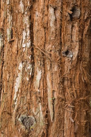 bark: Tree trunk texture