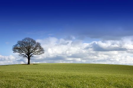 Winter rural English landscape of a single tree under a dramatic blue sky with approaching clouds on the horizon