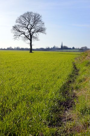 Single bare tree silhouetted against the sky stands in a green field in the distance a church spire on the horizon