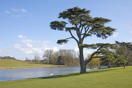 Fine Cedar Of Lebanon tree stands beside a ornamental pool on a sunny spring day Stock Photo
