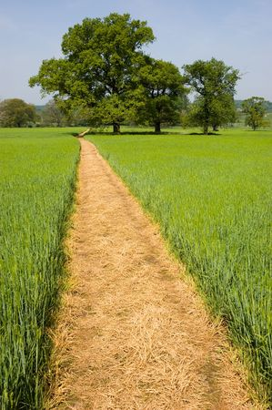 Long yellow footpath leads across a green grass field on farmland past distant trees Stock Photo