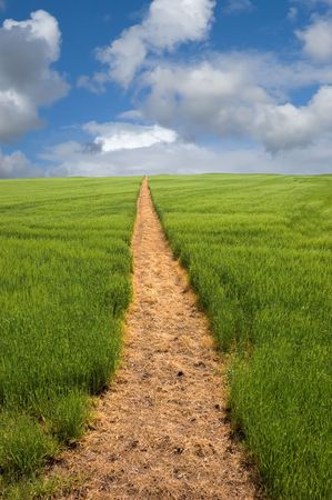 Long golden yellow footpath leads across green fields and up a hill to the distant horizon under a blue cloudy sky Stock Photo - 3071440
