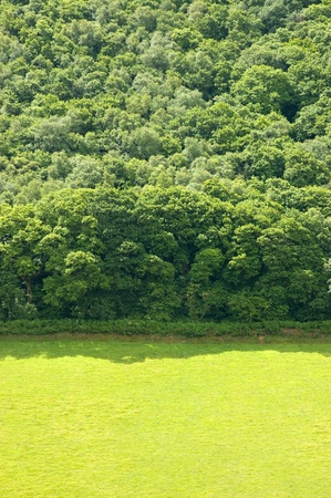 Green open pasture land and forest background Stock Photo
