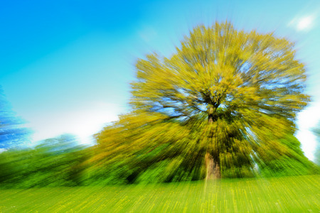 Zoom effect motion blur of a single tree in a field of buttercups on a sunny spring day