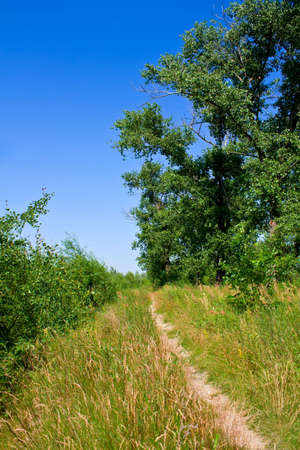 Take this path on a hot summer day to go back home from bathing in a river. This is country life of Belarus. photo