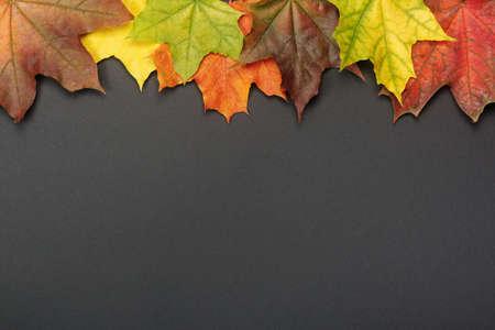 Colorful autumn maple leaves on black background. Autumn mockup for your design. Reklamní fotografie
