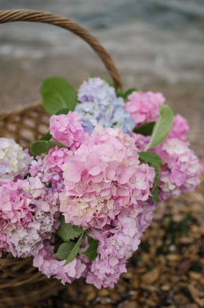 Beautiful pink-blue hydrangea on a background of the sea in a wicker basket