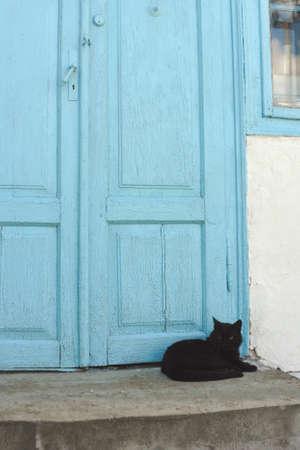 blue door: cat lying near blue door