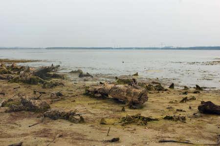 snag: Several snag on the shore of lake. Stock Photo