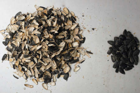 sunflower seed: Black sunflower seed and big heap of husk near it. Stock Photo
