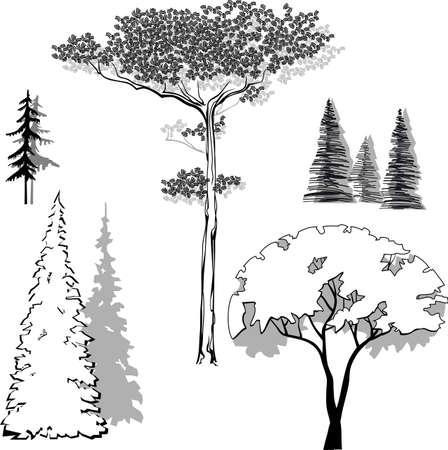 pine apple: vector illustration set of trees pine, spruce, fir, apple