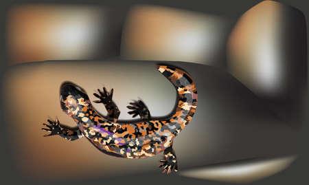 red lizard Stock Vector - 17120174