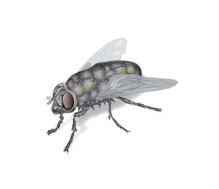 big fly Stock Vector - 17727443