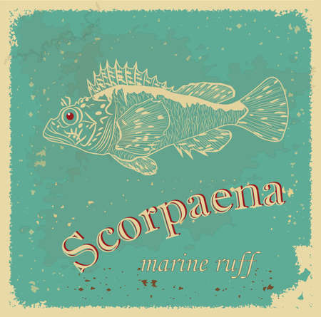 Scorpaena Stock Vector - 20304116