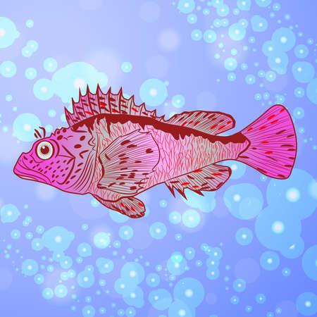transparent cornea: marine ruff
