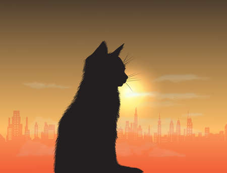 cat sitting on the sunset background