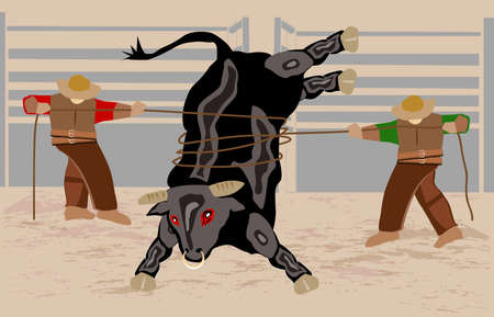 two cowboys on a rodeo lassoed a bull