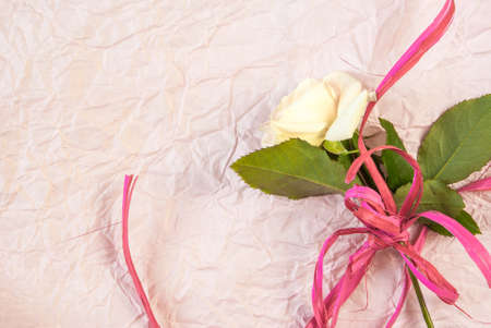 Tenderly pink rose on a pink textured paper background. Romantic mood. Copy space