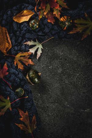 Fall dark stone background with autumn red and yellow leaves warm sweater or blanket and little pumpkins,  top view copy space