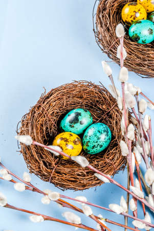 Easter background with birds nests, with eggs and spring flowers pussy willow, blue background top view copy space Stok Fotoğraf