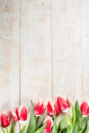 Valentines day background for congratulations, greeting cards. Fresh spring tulips flowers, on white wooden background top view copy space Archivio Fotografico