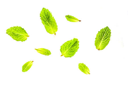 Fresh young green mint leaves isolated on white background