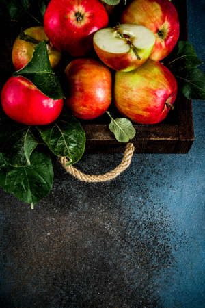 Raw fresh apples on dark blue background, copy space